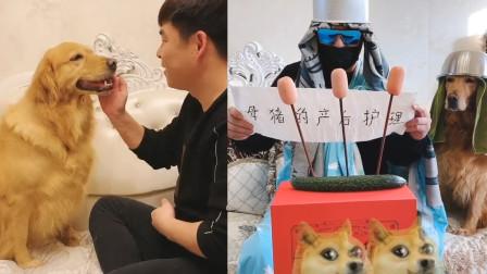 男子在家和狗玩,玩着玩着打起来了!网友:玩急眼了!