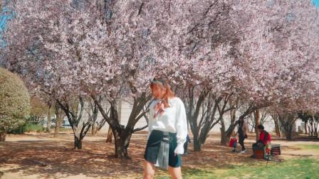 春天的味道!超美樱花 《apink - %%》