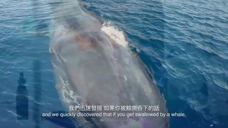 大胆科学:假如你被鲸鱼吞下后,你会幸存吗?