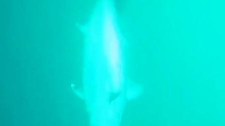 在现代化的科技下,就连钓鱼也极具科幻,鱼竿自带摄像头和信号