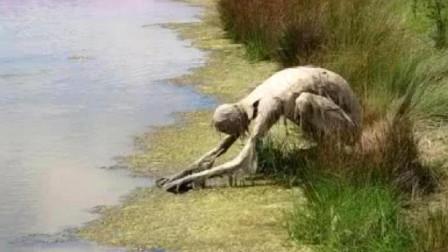 女子在河边散步突然发现一神秘生物趴着喝水镜头记录全过程
