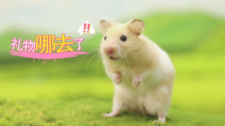 仓鼠想谈恋爱,准备送惊喜给心动对象,朋友的行为却让它丢脸