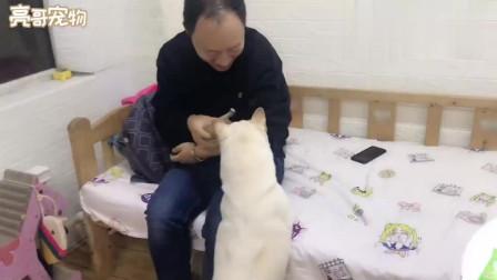 主人偷偷拿走一只狗崽,狗妈瞬间变脸,还回去查了好几遍!