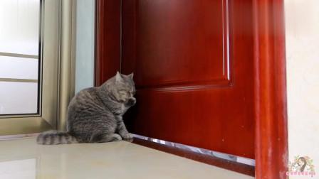 主人突然消失不见,测试猫咪是否担心,结果让人感动落泪!