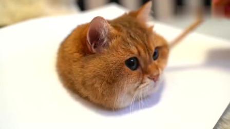 今天教大家如何画一只栩栩如生的猫咪