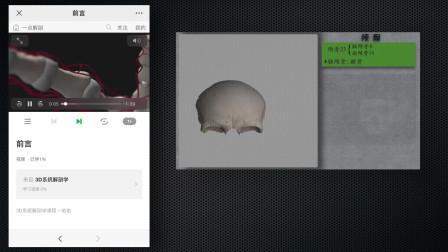3D系统解剖:新课程在这,快看过来呦!