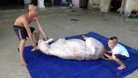越南人奇葩水煮牛,用大桶盖住烧12个小时,出锅后太浪费了