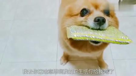 萌宠:暴躁狗狗抢走主人的卫生纸,送来了海绵擦!