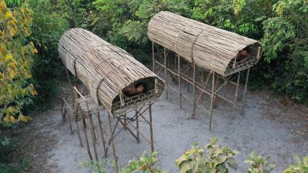 野外生存挑战,搭建高层庇护所,这样就能预防各种野兽