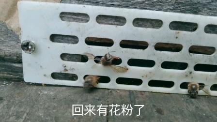 蜜蜂中毒怎么办?你是怎么处理的,我是这样处理的!觉得怎么样?