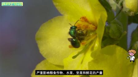 你知道是什么导致蜜蜂正在逐渐消失吗?