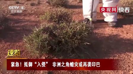 非洲闹蝗灾了 ,对中国来说是不是蝗灾!非洲之角蝗灾或再袭印巴