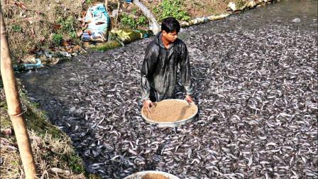 印度鲶鱼泛滥,池塘里黑压压的一片,网友:鱼比水多!