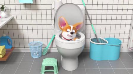 短腿小柯基:为什么厕所连狗子都不放过