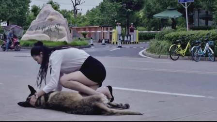 路边流浪狗受伤严重,遇见好心人搭救,太暖心了!