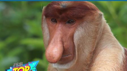 地球上长得最奇怪的10种动物——NO·8