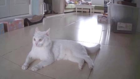 监控:当铲屎官睡觉时猫咪都在干嘛?