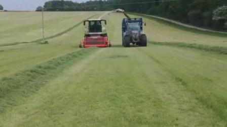 机械化生产牧草,牧草回收机快速将牧草装载车厢