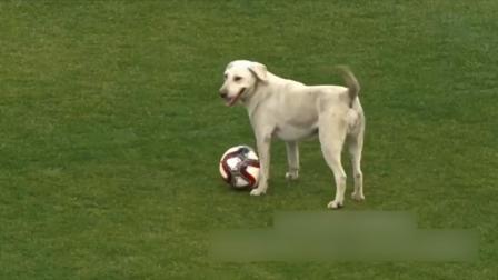 比赛进行当中,一只小狗狗突然闯进赛场...