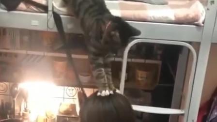 猫咪踩着下边美女的头下床,有考虑过人家的感受吗