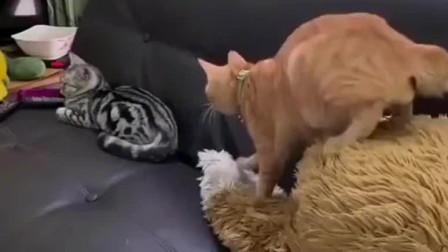 橘猫:它终于睡着了,我要开始报仇了,到底挠不挠呢?