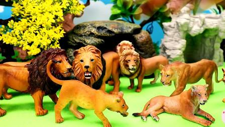 少儿益智,好多动物玩具聚集展示,狮子老虎豹子猴子,假山绿树,儿童玩具亲子互动