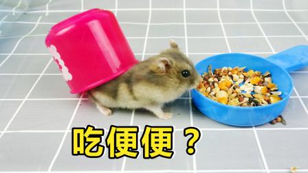 小仓鼠竟会吃自己的便便,网友:这是傻掉了吗?