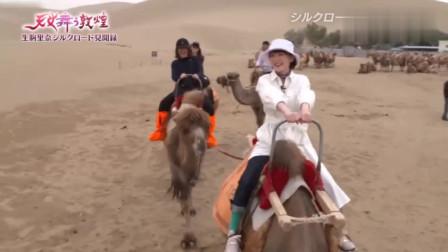日本节目:女星在中国旅游,重走丝绸之路,骑一次骆驼真不便宜!