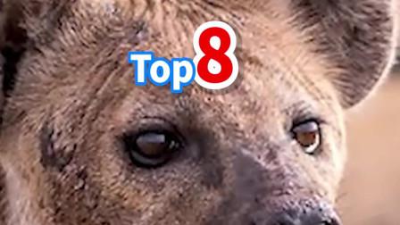 沙漠里最危险的8个原住民——NO·5