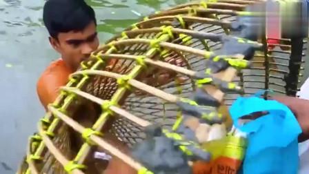 印度人民自制的地笼,刚出生的小鱼都跑不了