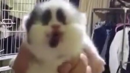 搞笑视频:我心想一只猫能丑到哪去 直到看见它正脸
