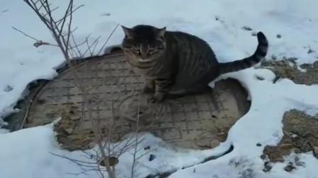 猫咪:雪地里太冻脚啦,我得找个没有雪的地方站会儿