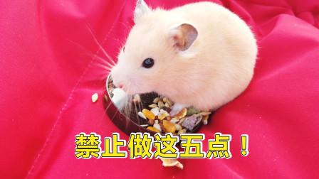 宠物日常:铲屎官要注意,饲养小仓鼠禁止做的5件事