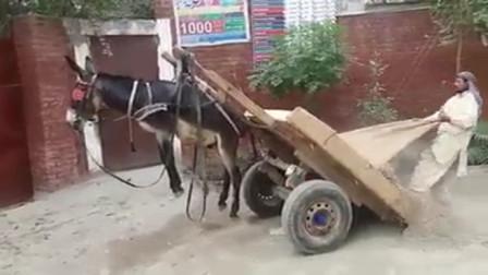 主人给驴卸货,原谅我不厚道地笑出了声,网友:这是人干的事吗