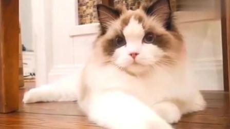 萌宠:猫咪和主人玩123木头人,谁动谁先输,可爱!
