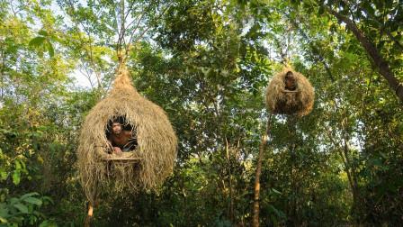 地上房子厌倦了,生存小哥做了一栋鸟窝房屋,直接挂在树上