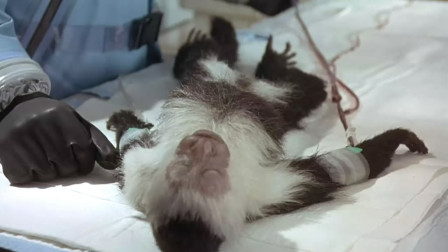 一只猴子携带烈性病毒,感染小镇所有人,部队不救人反要投放炸弹