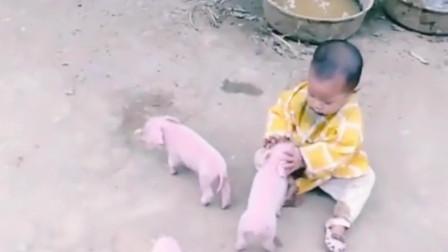 農村寶寶與小豬正在友好的交流,城市的孩子是體會不到這種快樂的!