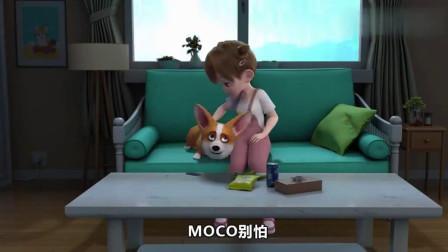 短腿小柯基:原来小胖宝贝主人疯起来比打雷更可怕,哈哈
