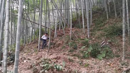 爷爷留下一片竹林,疫情期间要30岁的孙子继承,可到现场却很无语