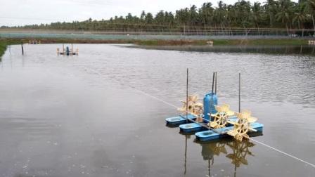 印度水产养殖的最为致命的弱点,全程聚焦,引领水产变革