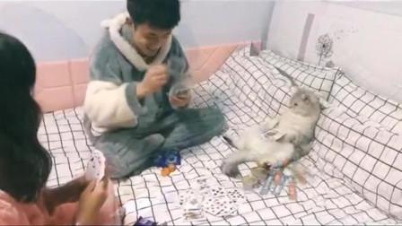 猫:流感什么时候好,这群傻子,什么时候去上班