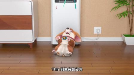 短腿小柯基:喂食的激情是你的,本大帅狗只想当个宅男