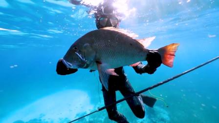 野生大冒险:下海抓鱼捕虾,忒喜欢这样的生活