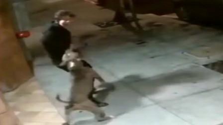 男子遛狗遇路边比特犬攻击,竟用身体保护自己的爱犬