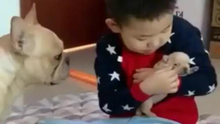 小主人抱着小奶狗不放,没想到狗妈妈急坏了,盯着孩子不愿离开!