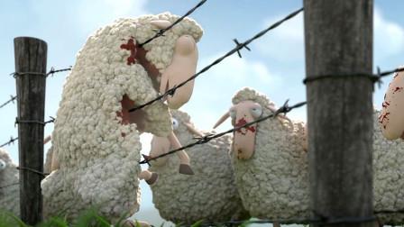 一群羊为找同类,宁愿撞死也不绕路而行,爆火讽刺动画短片