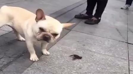 狗子简直太嚣张了,连小龙虾都不放在眼睛,迟早要吃苦头!