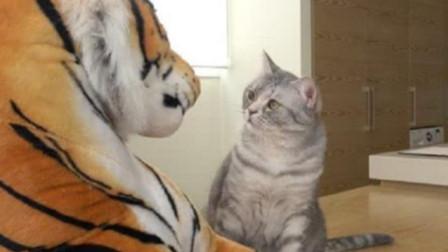 老虎和小猫咪第一次见面,举动令人意外,镜头拍下全过程