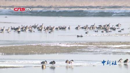 阿瓦提县塔里木河支流水量丰沛 群鸟翱翔